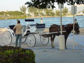 Miami Beach, paseo en Carruaje de Caballos Cancelado Después de las Denuncias de Maltrato Animal