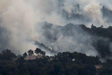 Los animales podrían ayudarnos a comprender mejor los efectos a largo plazo en la salud de los incendios forestales