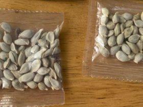 Amazon prohíbe las ventas extranjeras de plantas a los EE. UU. Luego de las entregas de semillas misteriosas