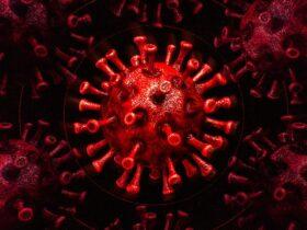Lea esta historia sobre cómo un software defectuoso ayudó a retrasar la distribución de la vacuna contra el coronavirus