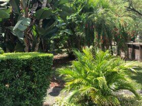 Cómo iniciar un jardín en el patio trasero de Florida