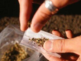 El distrito escolar de Florida despide a un maestro por usar marihuana medicinal